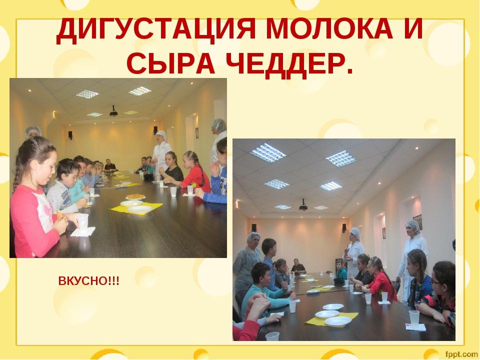 ДИГУСТАЦИЯ МОЛОКА И СЫРА ЧЕДДЕР. ВКУСНО!!!