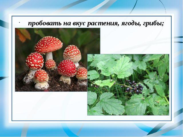 пробовать на вкус растения, ягоды, грибы;