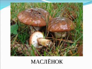 МАСЛЁНОК