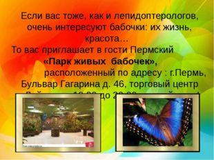 Если вас тоже, как и лепидоптерологов, очень интересуют бабочки: их жизнь, кр