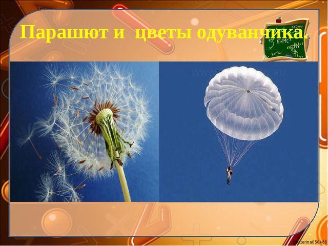 Парашют и цветы одуванчика. Ekaterina050466