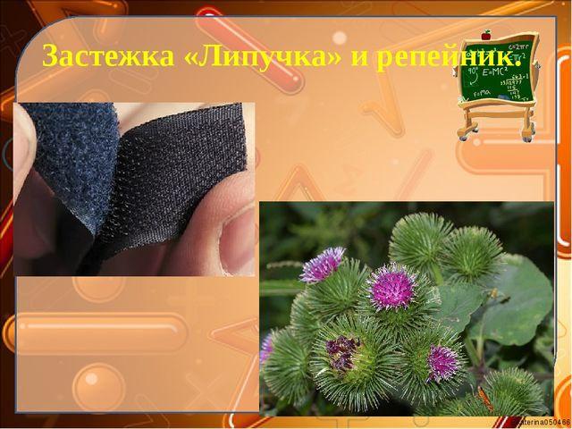Застежка «Липучка» и репейник. Ekaterina050466