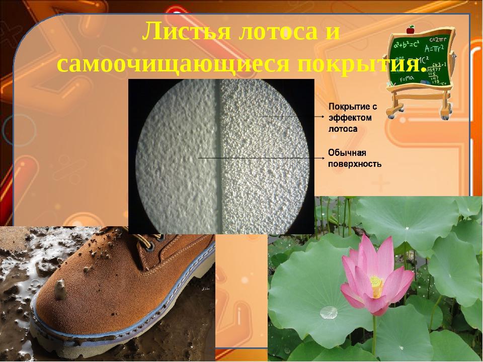 Листья лотоса и самоочищающиеся покрытия. Ekaterina050466