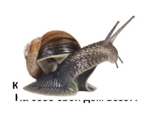 Загадка № 12 На узкой дорожке – Голова да рожки. Кто так медленно ползет, На