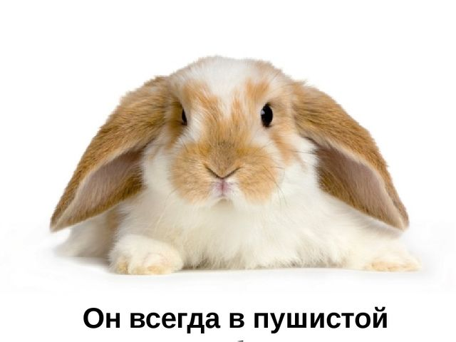 Загадка № 15 В сарае, в клетке он живёт, Морковку сладкую грызёт. Ох и острые...