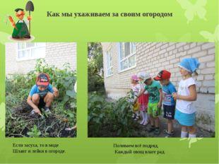 Как мы ухаживаем за своим огородом Если засуха, то в моде Шланг и лейки в ого