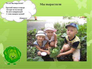 Мы вырастили Что же мы вырастили? Круглый овощ в огороде Он одет не по погоде
