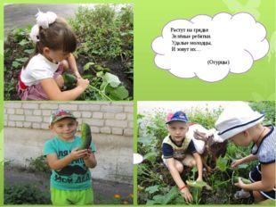 Растут на грядке Зелёные ребятки. Удалые молодцы, И зовут их… (Огурцы)