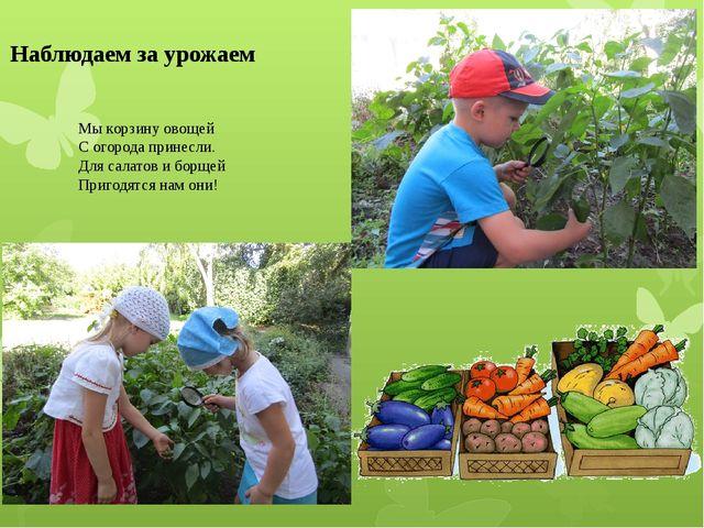 Наблюдаем за урожаем Мы корзину овощей С огорода принесли. Для салатов и борщ...