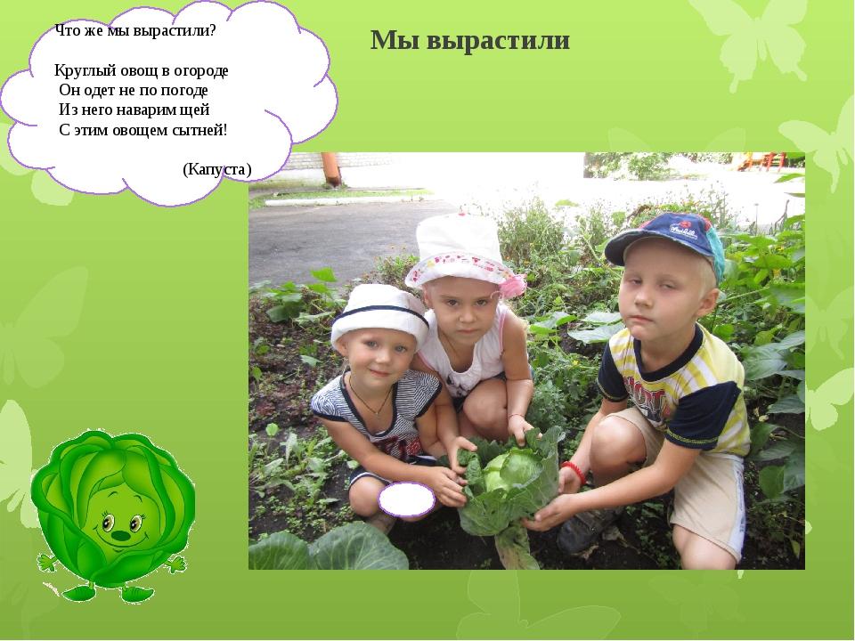Мы вырастили Что же мы вырастили? Круглый овощ в огороде Он одет не по погоде...