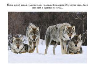 Волки зимой живут семьями: волк с волчицей и волчата. Это волчья стая. Днем о