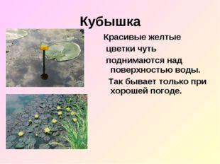 Кубышка Красивые желтые цветки чуть поднимаются над поверхностью воды. Так бы