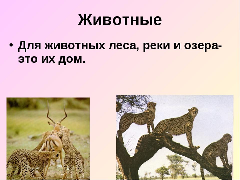 Животные Для животных леса, реки и озера- это их дом.