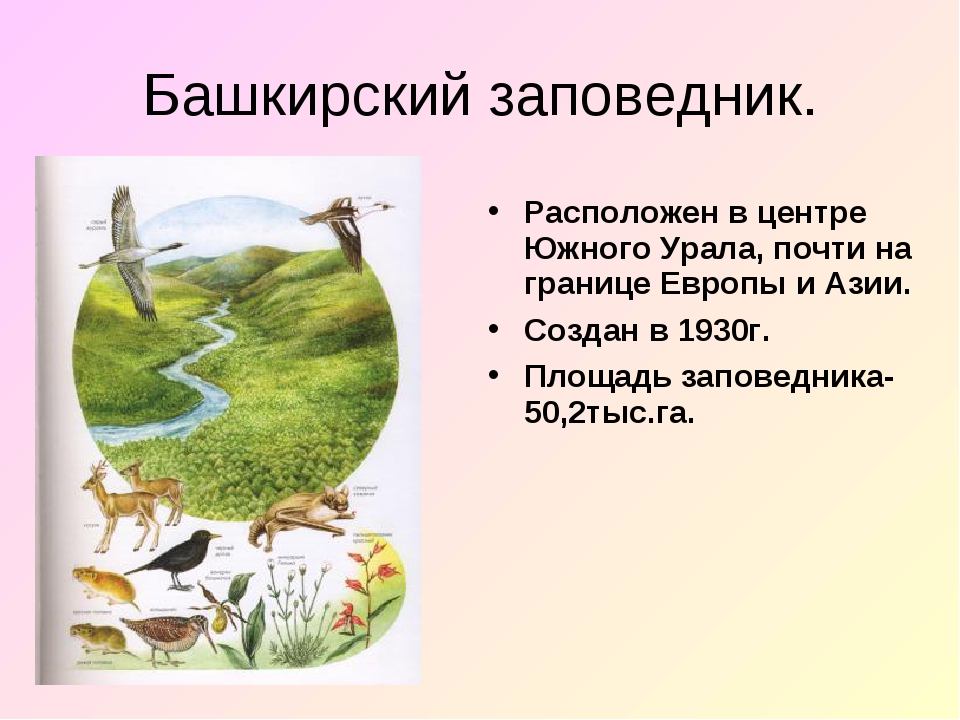 Башкирский заповедник. Расположен в центре Южного Урала, почти на границе Евр...