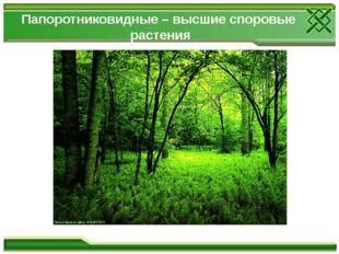 Папоротниковидные – высшие споровые растения