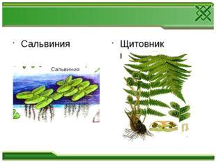Сальвиния Щитовник мужской