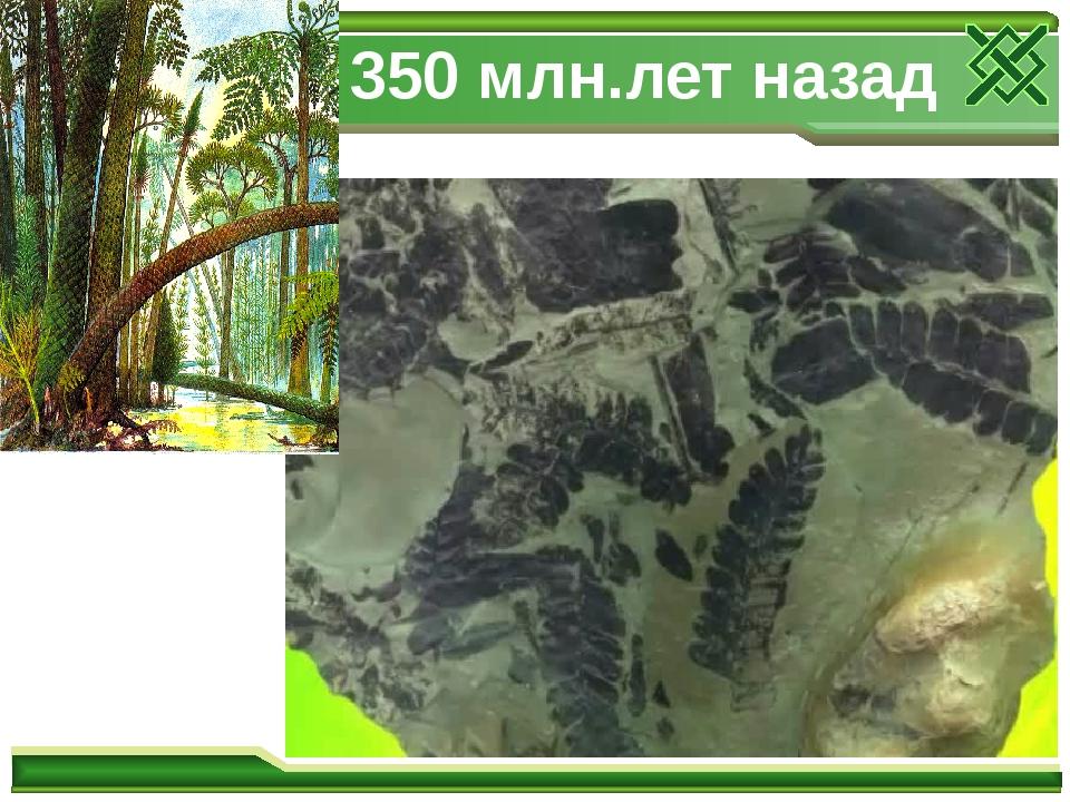 350 млн.лет назад