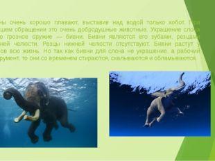 Слоны очень хорошо плавают, выставив над водой только хобот. При хорошем обра