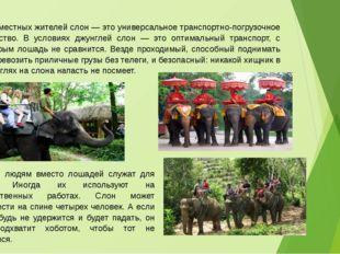Для местных жителей слон — это универсальное транспортно-погрузочное средство