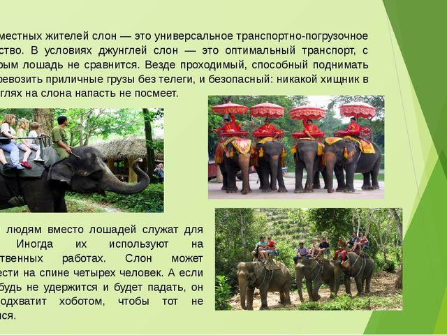 Для местных жителей слон — это универсальное транспортно-погрузочное средство...