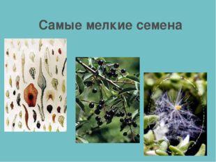 Самые мелкие семена