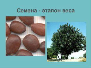 Семена - эталон веса