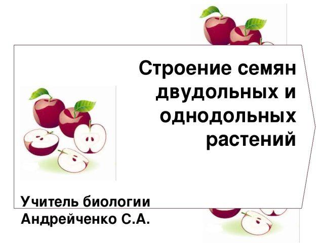 Строение семян двудольных и однодольных растений Учитель биологии Андрейченко...