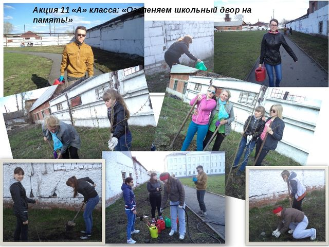 Акция 11 «А» класса: «Озеленяем школьный двор на память!»