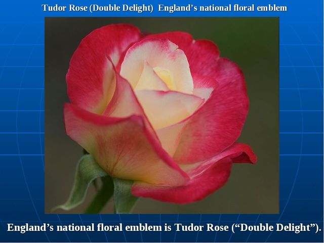 Tudor Rose (Double Delight) England's national floral emblem England's nation...
