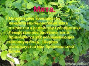 Мята. Многолетнее травянистое лекарственное растение мята относится к семейст