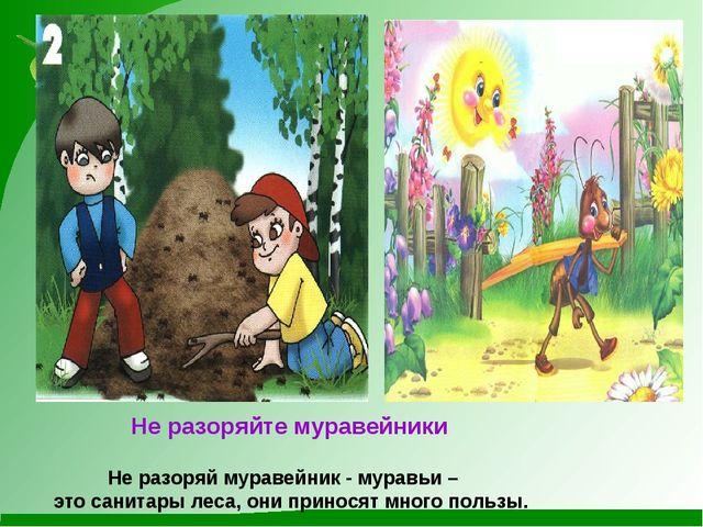 Не разоряйте муравейники Не разоряй муравейник - муравьи – это санитары леса...