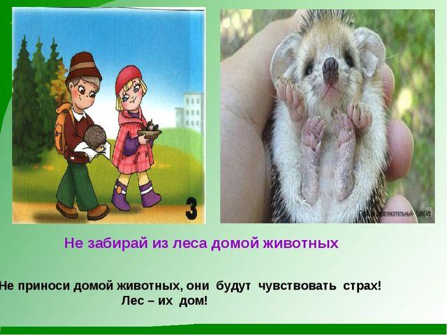 Не забирай из леса домой животных Не приноси домой животных, они будут чувст...
