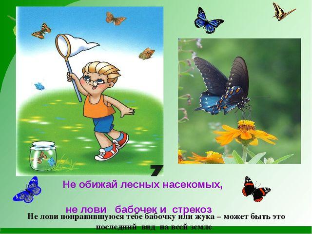 Не обижай лесных насекомых, не лови бабочек и стрекоз Не лови понравившуюся...