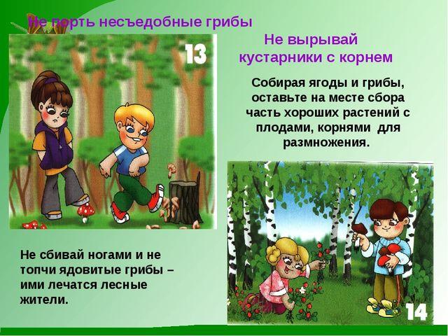 Не порть несъедобные грибы Не сбивай ногами и не топчи ядовитые грибы – ими...