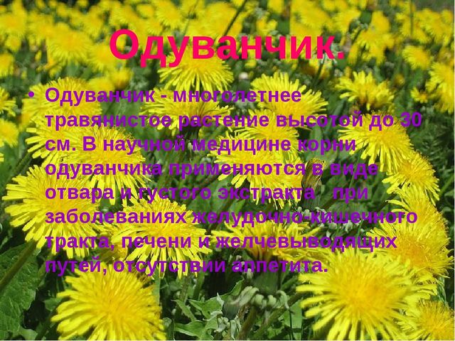 Одуванчик. Одуванчик - многолетнее травянистое растение высотой до 30 см. В н...