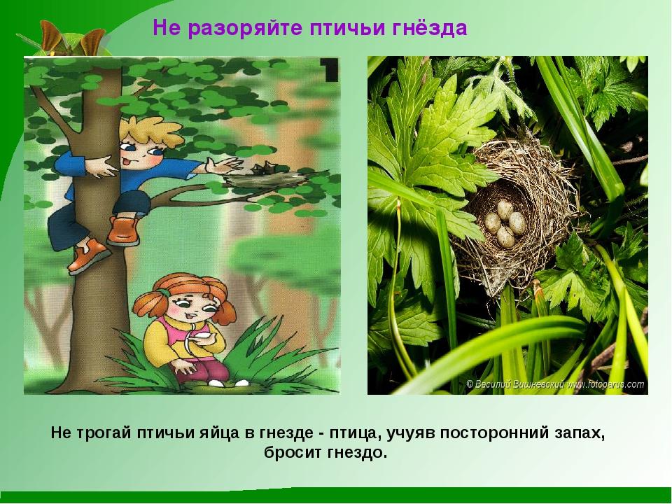 Не разоряйте птичьи гнёзда Не трогай птичьи яйца в гнезде - птица, учуяв пос...