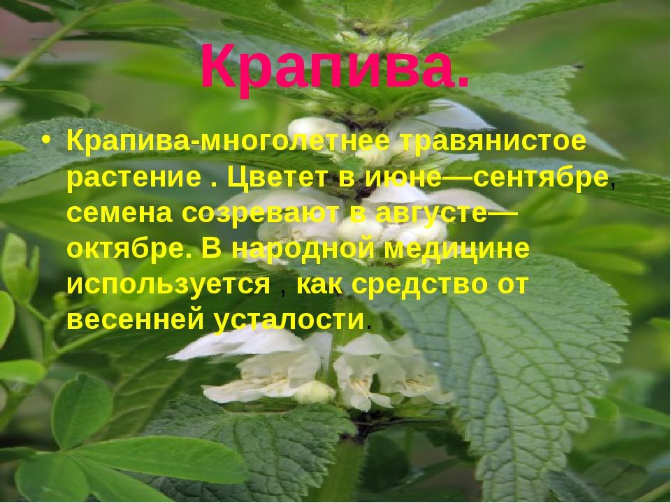 Крапива. Крапива-многолетнее травянистое растение . Цветет в июне—сентябре, с...