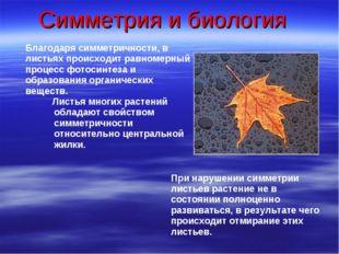 Симметрия и биология Благодаря симметричности, в листьях происходит равномерн