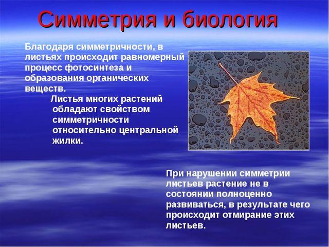 Симметрия и биология Благодаря симметричности, в листьях происходит равномерн...