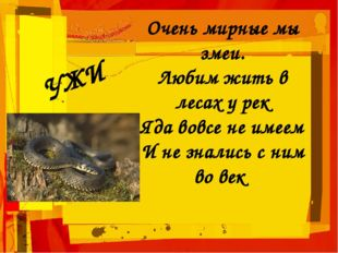 Очень мирные мы змеи. Любим жить в лесах у рек Яда вовсе не имеем И не зналис