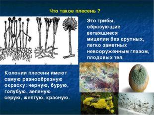 Это грибы, образующие ветвящиеся мицелии без крупных, легко заметных невооруж