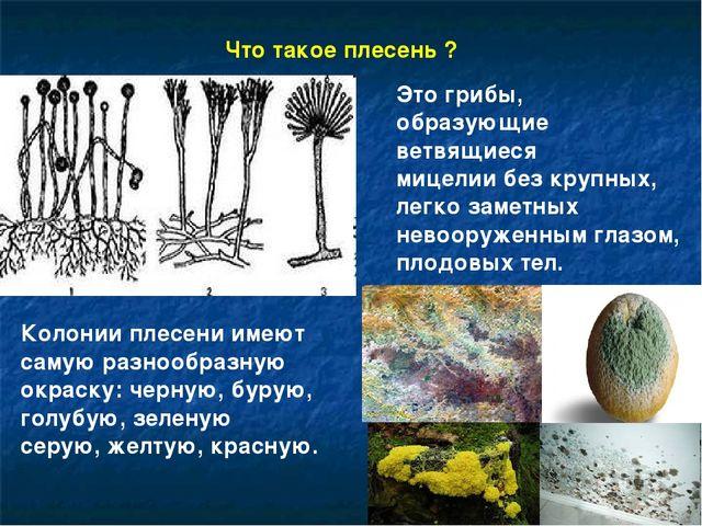 Это грибы, образующие ветвящиеся мицелии без крупных, легко заметных невооруж...