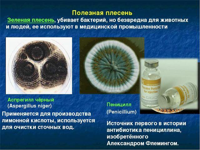 Полезная плесень Зеленая плесень, убивает бактерий, но безвредна для животны...