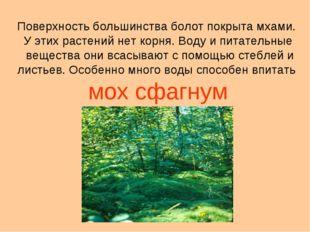 Поверхность большинства болот покрыта мхами. У этих растений нет корня. Воду