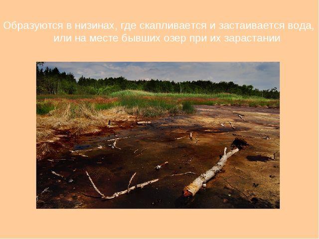 Образуются в низинах, где скапливается и застаивается вода, или на месте бывш...