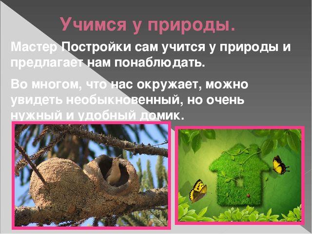 Учимся у природы. Мастер Постройки сам учится у природы и предлагает нам пона...
