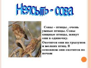 Совы – птицы , очень умные птицы. Совы хищные птицы, живут они в одиночку. О