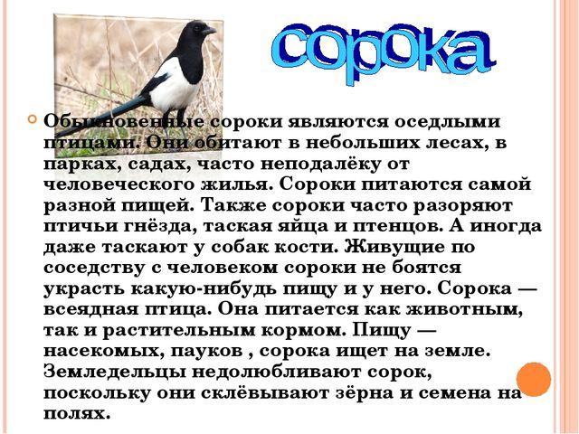 Обыкновенные сороки являются оседлыми птицами. Они обитают в небольших лесах,...