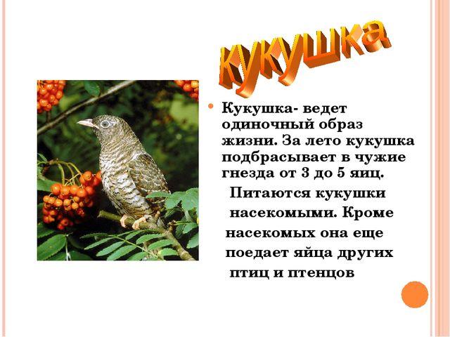 Кукушка- ведет одиночный образ жизни. За лето кукушка подбрасывает в чужие гн...
