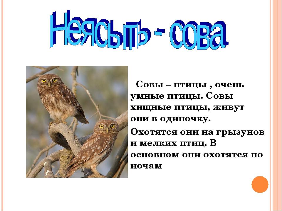 Совы перелетные птицы или нет